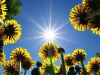 Майские солнечные зайчики