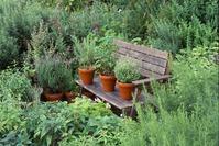 Лекарственные травы в саду