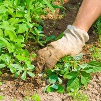 Лучшие способы избавления от сорняков