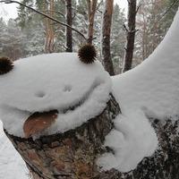С утреца, по снежку...