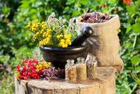 Как применять лекарственные травы