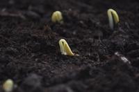 Семена огурцов – что нужно знать?