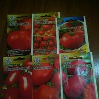 А у меня.., а мне.. - ВО сколько помидор!