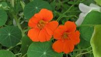 Цветущий сад с минимальными усилиями