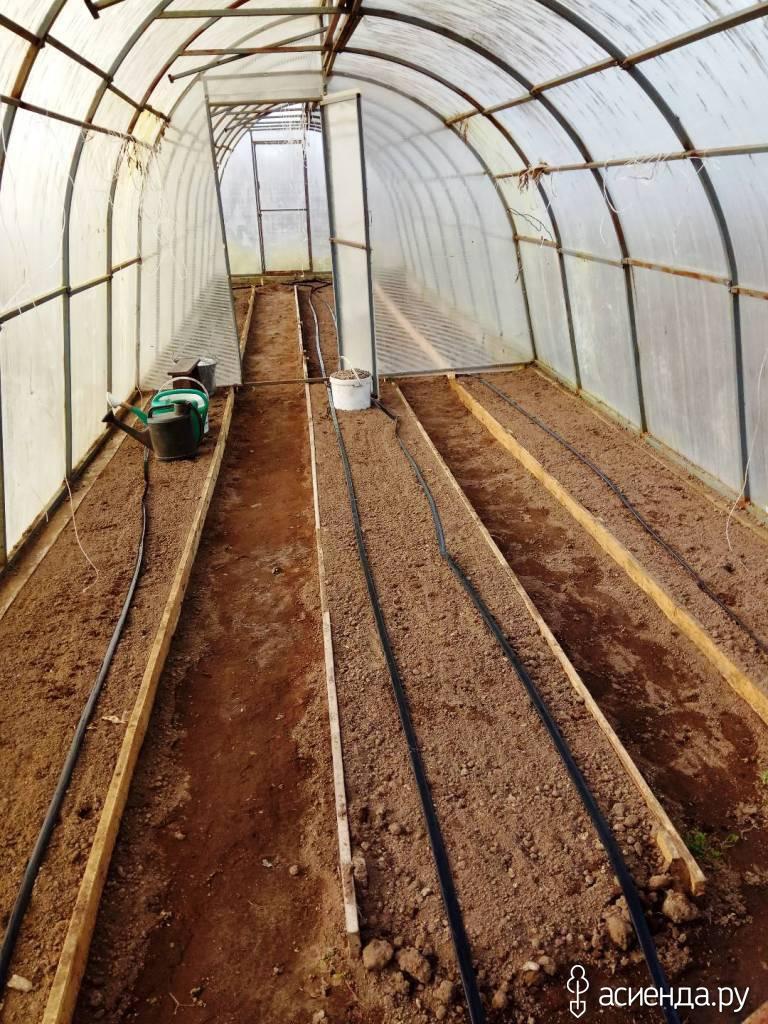 Выращивание огурцов зимой в теплице на 749