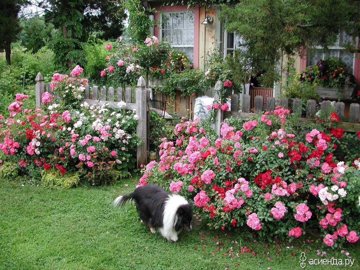 Дизайн розарий в саду