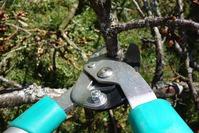 Весеннее формирование кроны плодовых деревьев