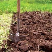 11 неожиданных компонентов для удобрения почвы