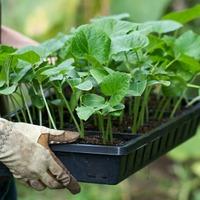 Удобрения для рассады: нужны ли и как их выбрать?