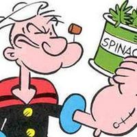 Ращу свои семена шпината