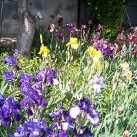 Клумба весной