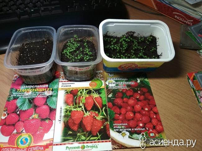 Выращивание земляники из семян отзывы 54