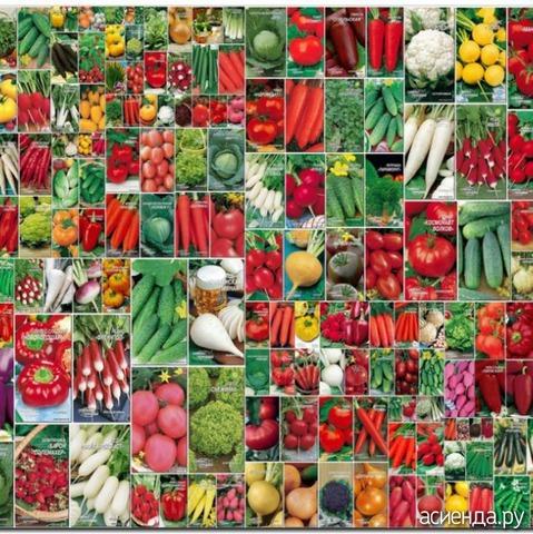 Продажа семян и рассады 376