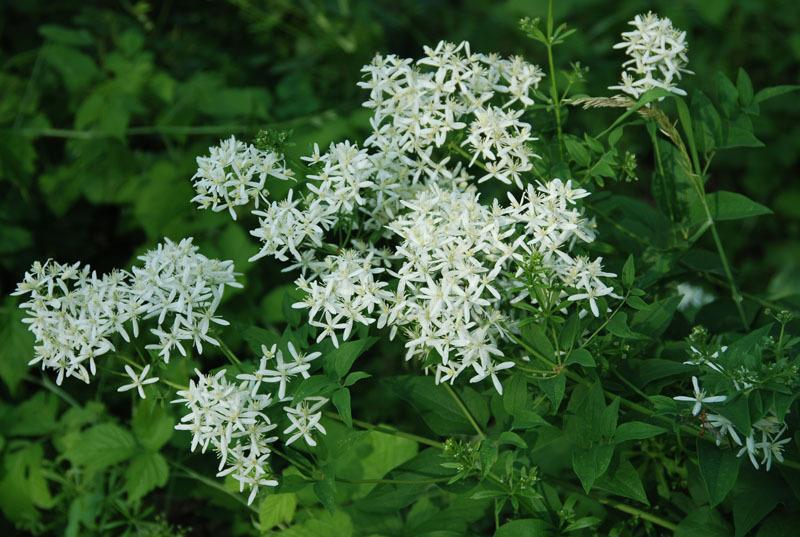 растения и Цветы Заповедник Приокско-Террасный