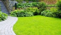 Дачный газон от А до Я