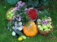 Природное земледелие. У кого есть опыт?