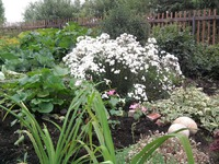 Садовый участок на торфяной почве