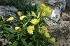 Клумбы и цветники
