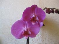 Маленькая коллекция моих орхидей