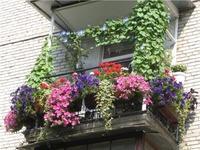 Клумба на балконе