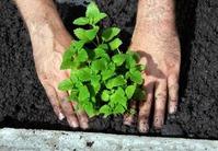 Как вырастить здоровую качественную рассаду