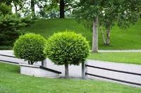 Декоративные деревья и кустарники на даче