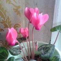 Весна на окне