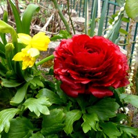 Цветы у дома моего
