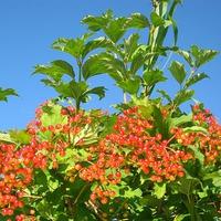 Растительный и животный мир Сахалина