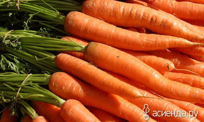 Условия выращивания моркови