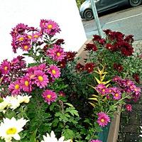 Цветы у дома моего 2