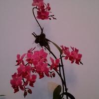 Орхидеюшки