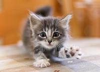Мой котеночек родился!!!