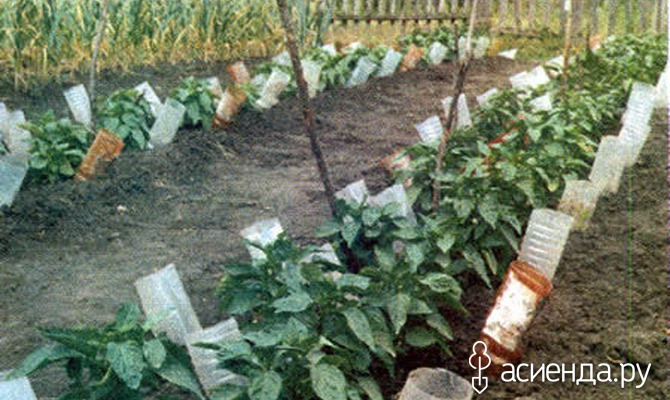 Интересные способы полива дачного участка или огорода