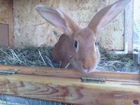 Кролики - это не только...