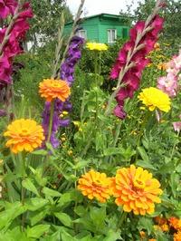 Мои дачные цветы