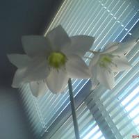 Комнатный цветок. Подскажите название?