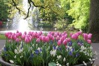 Тюльпаны: выращиваем на даче