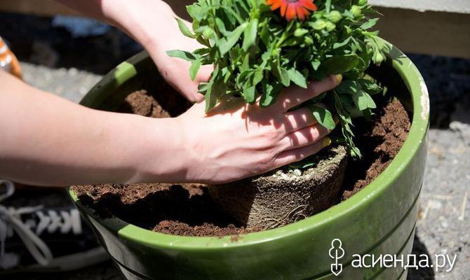 Выгонка луковичных цветов: тюльпанов, гиацинтов