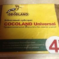 Кукарача тоже купила немного семян