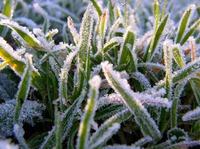 Защищаем растения от заморозков