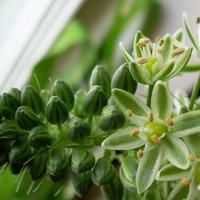 Исцеляющие комнатные растения. Часть 3