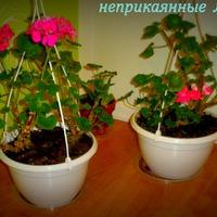 Цветы после переезда на новую квартиру