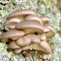 Искусство выращивать грибы
