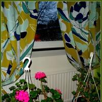Цветы после переезда -2