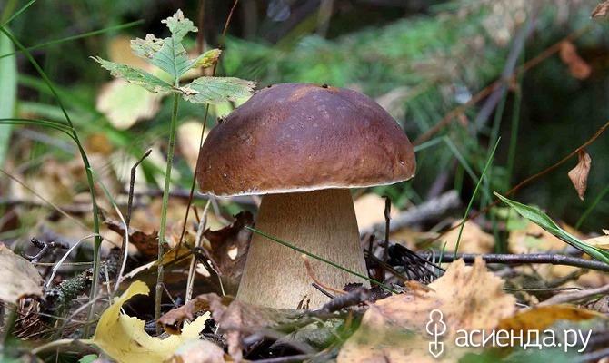Прогулка за съедобными грибами