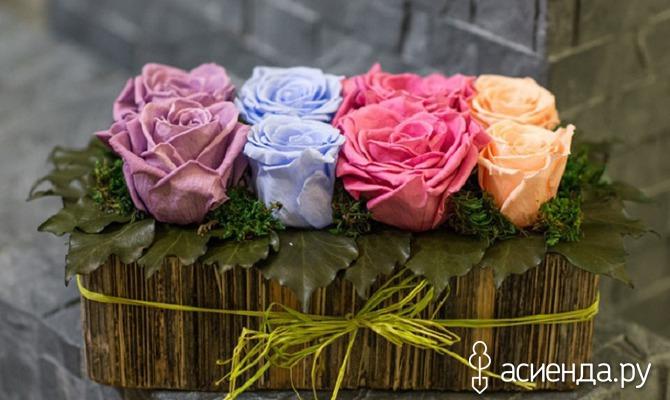 Флористическое чудо – стабилизированные растения