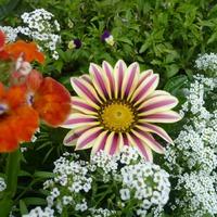 Цветы цветут