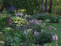 Теневой цветник: создание, оформление и выбор растений