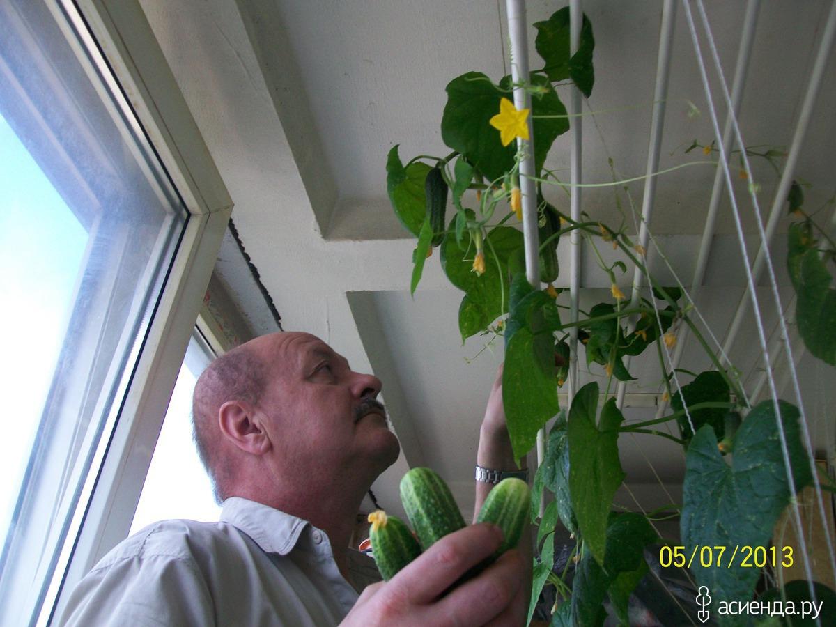 """Фото: альбом """"урожай на балконе"""": альбомы."""